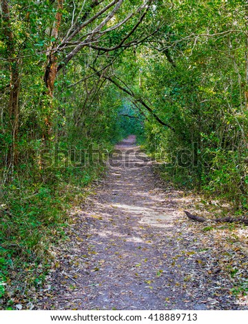 Beautiful scene of a hiking trail in a jungle like forest in the Florida Everglades - stock photo