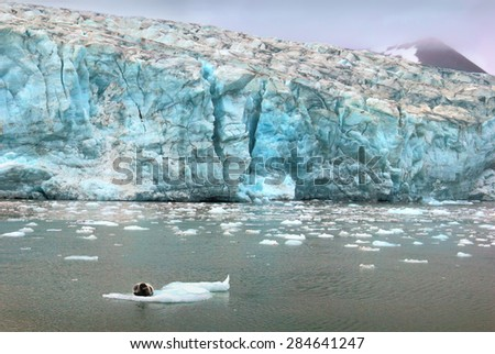 Beautiful scenery image - blue ice of Esmark glacier in Istfjorden and sea lion - view from cruise ship, Spitsbergen archipelago (Svalbard island), Norway, Greenland Sea - stock photo