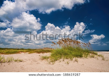 Beautiful scenic beach dunes with Sea Oats (Uniola Paniculata)  - stock photo