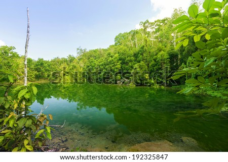 Beautiful scenic in rainforest, Emerald Pool - Krabi - Thailand - stock photo