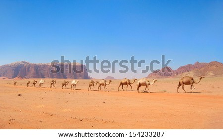 Beautiful scenic view of camel caravan in colorful sands against the background of distant violet rugged mountain range and clear blue sky in Wadi Rum desert, Jordan, Middle (Near) East, Western Asia - stock photo