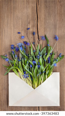 Beautiful Scilla siberica(Siberian squill or wood squill) on wooden background. First spring flowers, place for text, postcard. Snowdrops - stock photo