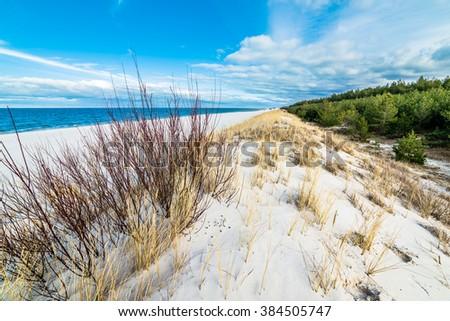 Beautiful sea landscape. Sandy beach, grass sand dune and pine forest, Leba, Baltic Sea, Poland - stock photo