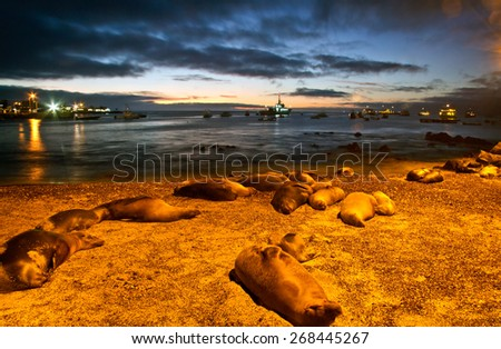 Beautiful sea lions sleeping along the port in San Cristobal island during sunset, Galapagos, Ecuador - stock photo