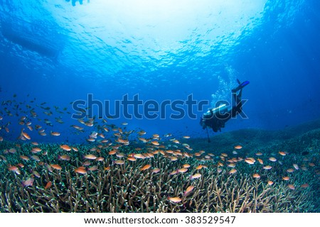 Beautiful shallow reef at shallow water with the group of small coral fishes and a diver above the reef. Nusa Penida, Indonesia. - stock photo