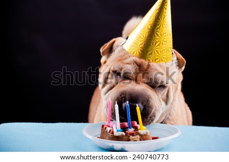 beautiful sharpei dog celebrating birthday - stock photo