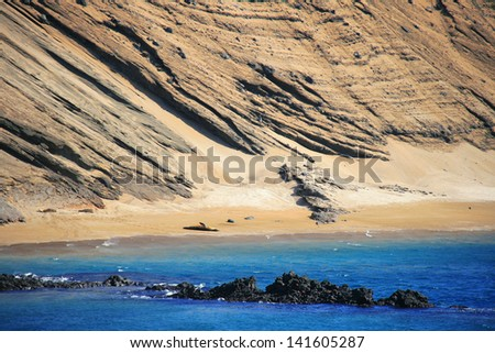 Beautiful shore of the Galapagos, Ecuador, with a sea lion resting on the beach - stock photo