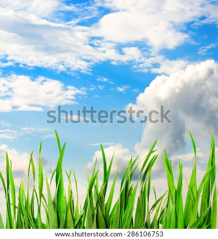 Beautiful sky with grass - stock photo
