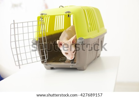 Beautiful small animal in cage - stock photo