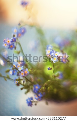 beautiful small blue flowers forget-me-not - stock photo