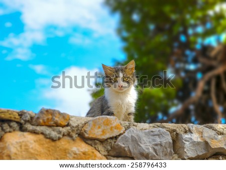 beautiful small cat staring at Hydra island in Greece. HDR - stock photo
