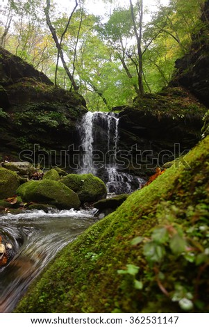 beautiful small waterfall in autumn forest -peaceful green natural park, small stream scenic scenery with moss on wet stone - stock photo