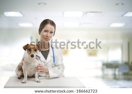 Beautiful Smiling Young Doctor Sitting at table Vet Clinic Examines Dog. Interior of a modern light Veterinary Hospital  - stock photo