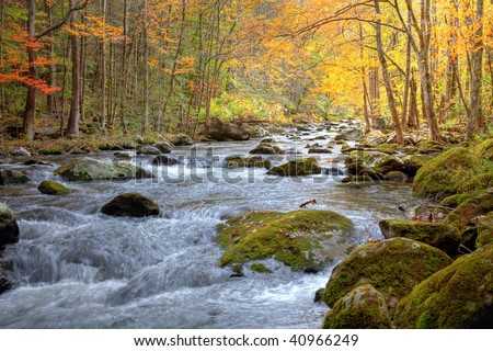 Beautiful Smoky Mountain stream in the Fall season, showing golden, red and green trees lining the stream and rushing water with moss covered rocks. - stock photo