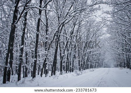 Beautiful snow-covered road in winter forest - stock photo