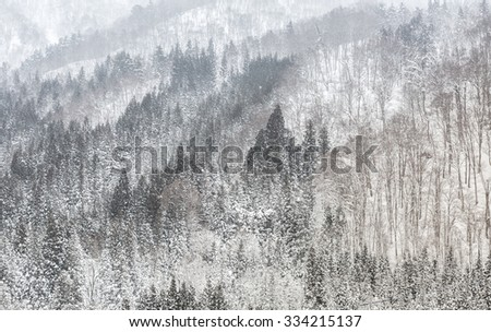 Beautiful Snowfall winter landscape with snow covered trees - stock photo