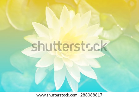 Beautiful soft color yellow and blue flowers backgrounds nature - Lotus - stock photo