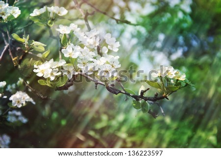 Beautiful soft focus photo of spring flowers on magically lighted background - stock photo