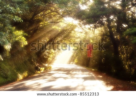 BEAUTIFUL SOLAR BEAMS IN A QUIET WOOD - stock photo