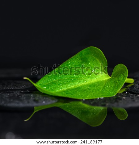 beautiful spa background of green leaf Calla lily on zen basalt stones with drops in reflection water, closeup - stock photo
