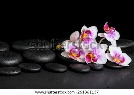beautiful spa background of purple orchid phalaenopsis on black zen stones with drops  - stock photo