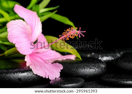 beautiful spa composition of pink hibiscus flower and twig bamboo on zen basalt stones with drops - stock photo