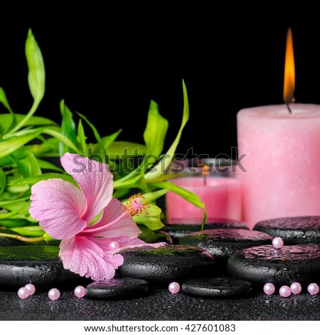 beautiful spa composition of pink hibiscus flower, twigs bamboo, pearl beads and candles on zen basalt stones with dew, close up - stock photo