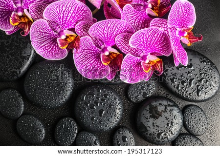 Beautiful spa concept of blooming twig of stripped violet orchid (phalaenopsis ) on zen stones with drops  - stock photo