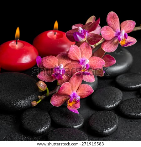 beautiful spa concept of blooming twig red orchid flower, phalaenopsis with water drops and candles on zen basalt stones, closeup - stock photo