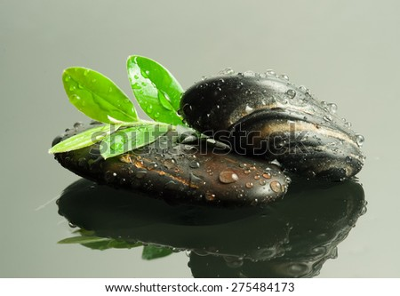 beautiful spa concept of green leaf on zen basalt stones with water drops on pebble - stock photo