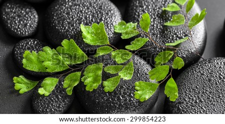 beautiful spa concept of green twig Adiantum fern on zen basalt stones with dew, panorama  - stock photo