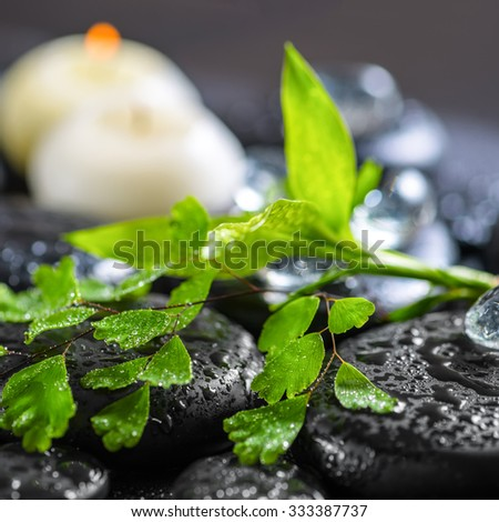 beautiful spa concept of green twig fern, bamboo, ice and candles on zen basalt stones with drops, closeup - stock photo