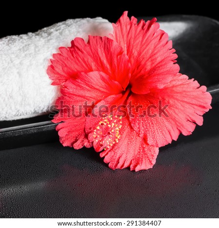beautiful spa concept of red hibiscus flower with dew and white rolled towel, closeup - stock photo