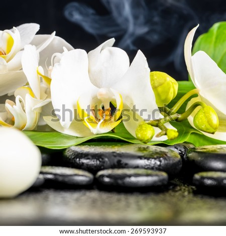beautiful spa concept of white orchid flower, phalaenopsis, green leaf with dew, smoke and candles on black zen stones, closeup - stock photo