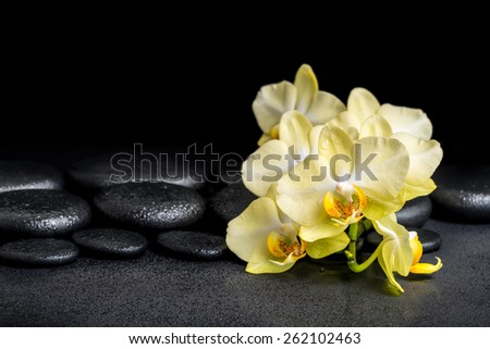 beautiful spa concept of yellow orchid phalaenopsis on black zen stones with drops - stock photo