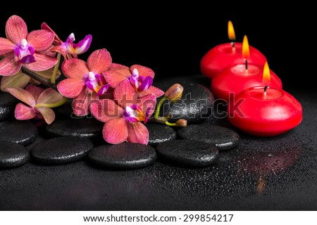 beautiful spa still life of blooming twig red orchid flower, phalaenopsis with water dew and candles on zen basalt stones, closeup - stock photo