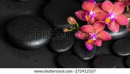 beautiful spa still life of blooming twig red orchid flower, phalaenopsis with water drops on zen basalt stones, panorama  - stock photo