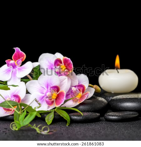 beautiful spa still life of purple orchid phalaenopsis, green twigs and candle on black zen stones with drops - stock photo