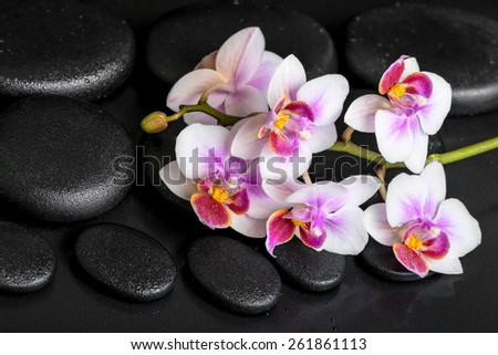 beautiful spa still life of purple orchid phalaenopsis on black zen stones with drops - stock photo