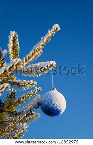 Beautiful sphere, hanging on snow fur-trees - stock photo