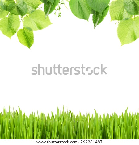 Beautiful spring background with leaves and green grass - stock photo