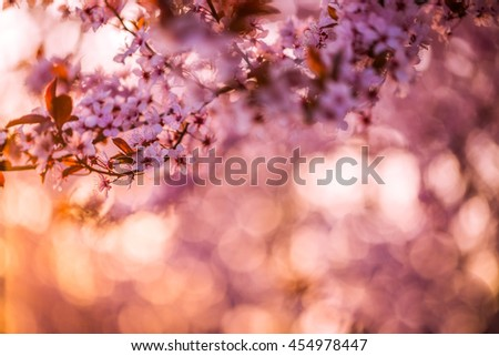 Beautiful spring blooming tree, gentle white and pink flowers, fresh cherry blossom border on soft focus background, spring time nature concept. Inspirational bokeh background. - stock photo