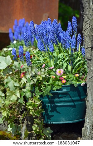 Beautiful spring bluebells in flowerpot - stock photo