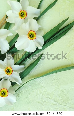 Beautiful spring daffodils on artificial background - stock photo