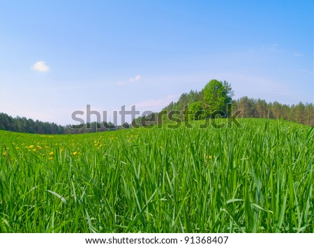 beautiful  spring field with fresh long green grass and dandelions - stock photo