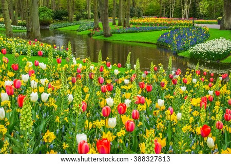 Beautiful spring flowers in Keukenhof park in Netherlands (Holland)  - stock photo