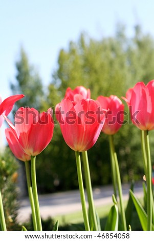 Beautiful spring flowers in park - stock photo