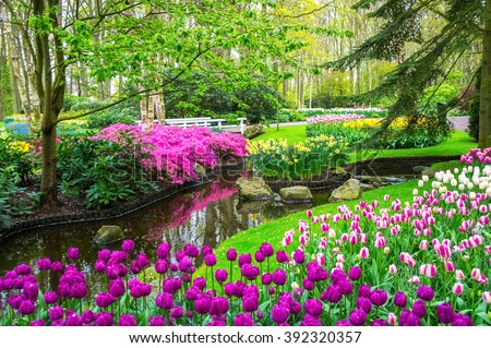 Beautiful spring flowers near pond in Keukenhof park in Netherlands (Holland)  - stock photo
