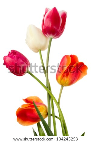 Beautiful spring flowers on a white backgrounds - stock photo