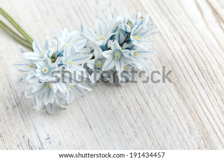 beautiful spring flowers on wooden surface - stock photo
